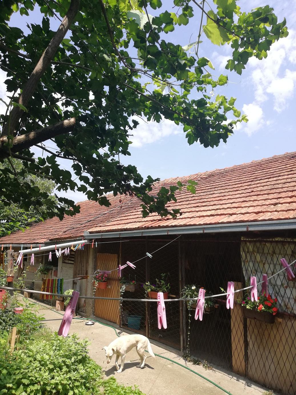 Spratna sređena kuća 250 m2+200m2 plac 12 ari + 30 ari